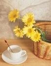 [減肥茶]天然減肥茶配方,不同體質喝不同減肥茶